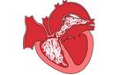 Is hartworm preventief te behandelen?