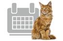 Hoe vaak moet ik mij kat of hond ontwormen